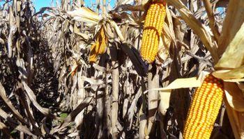 La venta de soja, carne y maíz fue clave para el crecimiento de las exportaciones
