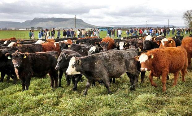 Los costos superaron los precios ganaderos