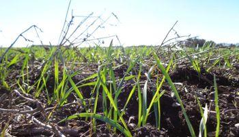 A qué precios se anotaron los primeros negocios de trigo 2020/21