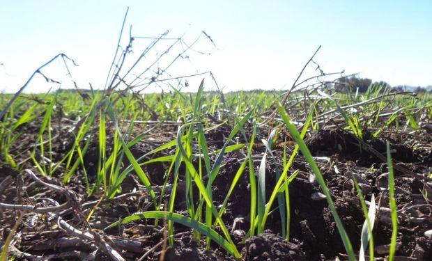 Se anotaron los primeros negocios de trigo 2020/21.