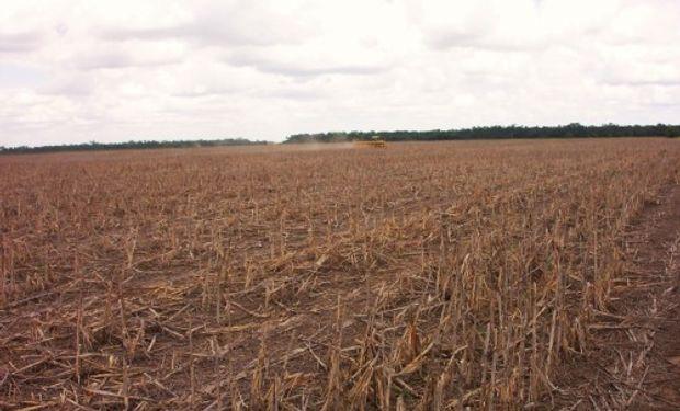 La Bolsa de Cereales de Buenos Aires destacó que se mantienen las expectativas de siembra y producción para la campaña 2018/19.