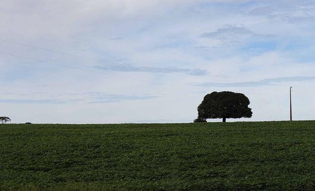 Rio Grande do Sul elevará el área de soja en 2,7% en 2013/14