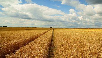 Elevan pronóstico mundial de trigo 2014/15