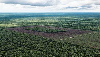 Diputados debatió sobre la desforestación y analizaron las diferentes miradas