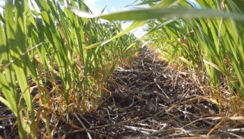 Aapresid puso a la agricultura siempre verde dentro de la agenda global