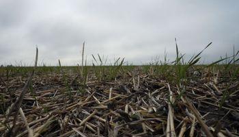 Pronóstico del clima: qué puede pasar con las lluvias en los próximos 15 días