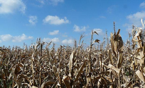 La Provincia busca homologar la emergencia agropecuaria ante Nación