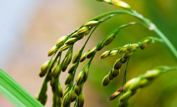 Es el primero en 30 años: un herbicida logró una nueva clasificación de modo de acción