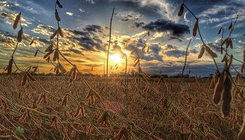 La soja sube por séptima rueda consecutiva en Chicago
