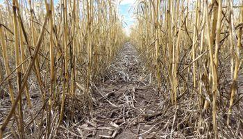 ¿Por el suelo cómo andamos? Seis indicadores que definen la sustentabilidad de la producción