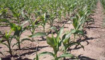 La Bolsa de Cereales de Córdoba presentó una nueva calculadora de márgenes agrícolas