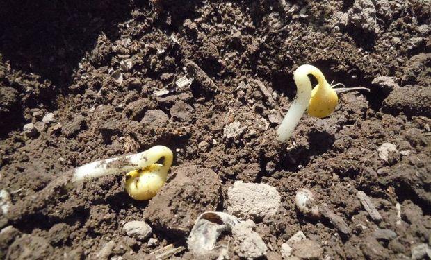 La actividad agropecuaria y los impuestos: sementeras.