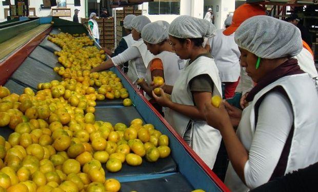 En 2008 se exportaron  1.500.000 toneladas de fruta.
