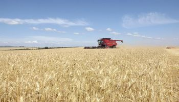 Trigo: Brasil implementó la cuota de importación libre de aranceles extra Mercosur