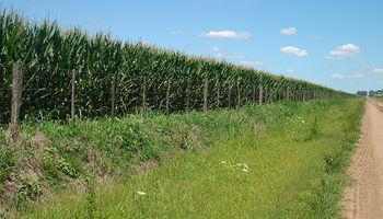 El trigo necesita entre 60 y 140 milimetros