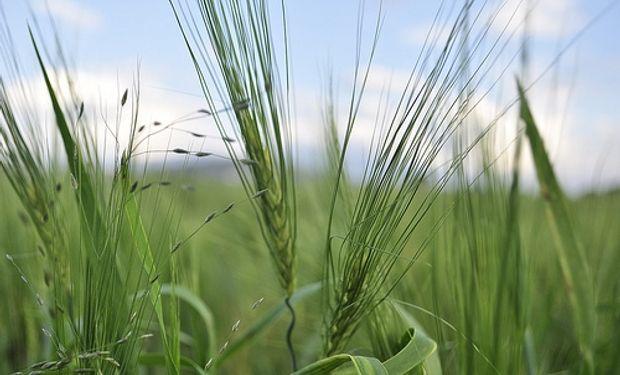 Argentina abastecedor de granos forrajeros en Arabia Saudita