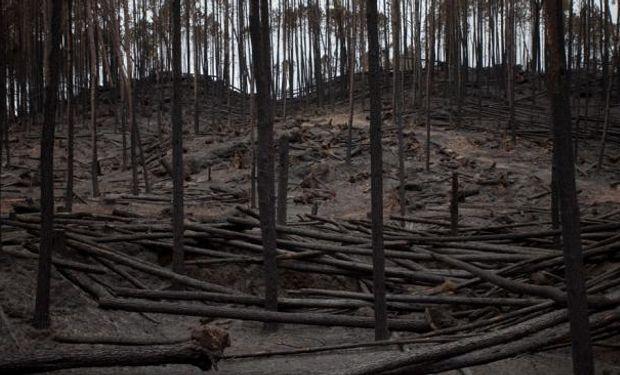 Incendios en bosques cultivados, el día después