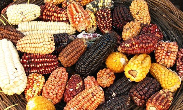 Caída de los cereales hizo descender los precios de los alimentos