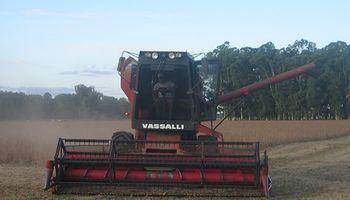 El agro espera un mayor ajuste cambiario en lo que resta del año