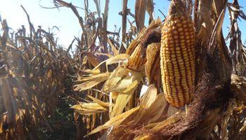 Los cultivos podrían enfrentar los meses más exigentes del verano sin grandes aportes de humedad