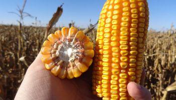 Un productor que vendió maíz luego de los cambios impositivos vio caer su resultado en un 68%