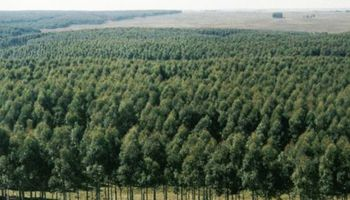 Monsanto plantará 4000 árboles en Argentina para mitigar sus emisiones