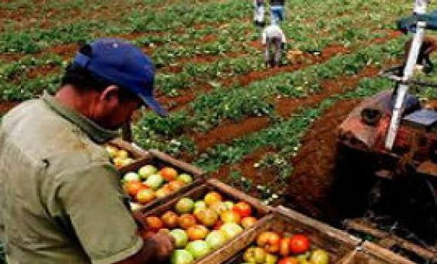 Cae la producción mundial de alimentos