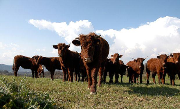 China retomó las compras de ganado en pie uruguayo