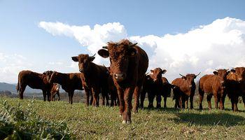 La ganadería apuesta a la innovación