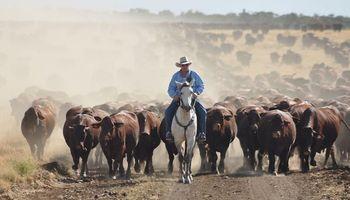 ¿Cómo funciona la ganadería australiana?