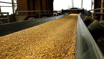 Los exportadores de maíz también celebran la apertura de China al cerdo argentino
