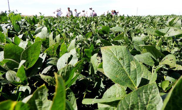 Prevén la superficie de soja más baja de los últimos 20 años en zona núcleo: qué piensa el productor