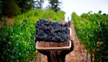 Lanzan préstamos con tasa bonificada para el sector vitivinícola
