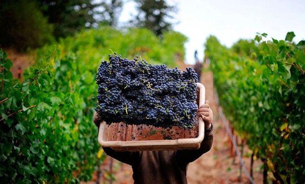 El objetivo es brindar financiamiento a tasas accesibles a pequeños productores de la provincia, de cara a la vendimia de este año.