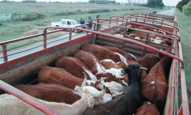 La exportación de carne vacuna fue la más baja en 12 años