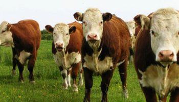 Rosgan: los negocios de Agroactiva reflejaron la situación actual de la ganadería