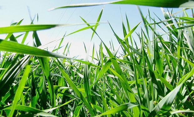 La cebada sigue despertando interés en el sudeste bonaerense