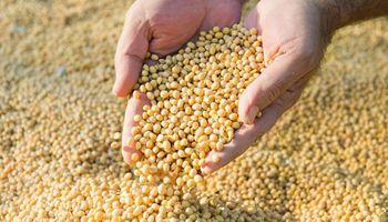 Se presentó en el Congreso el proyecto de ley de semillas de Casem