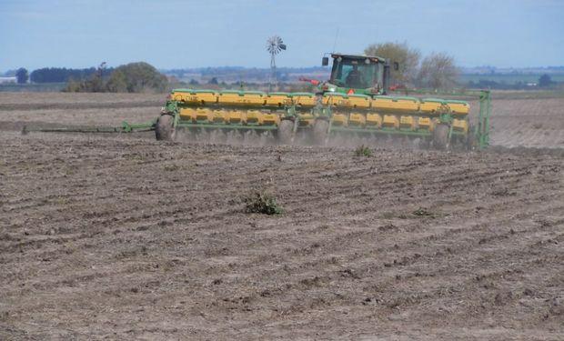 Se dio por iniciada la siembra de maíz con destino grano comercial correspondiente a la campaña 2019/20 en todo el país.