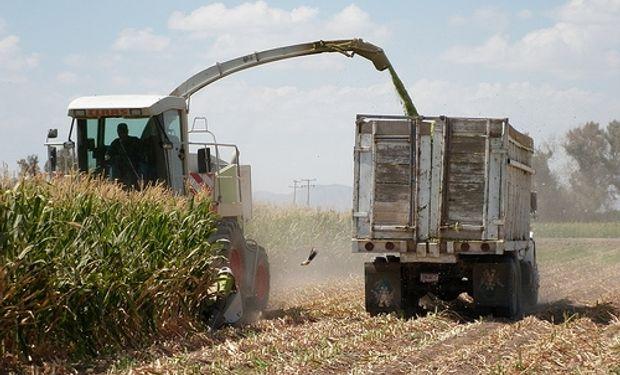Lanworth eleva estimación de producción mundial de maíz