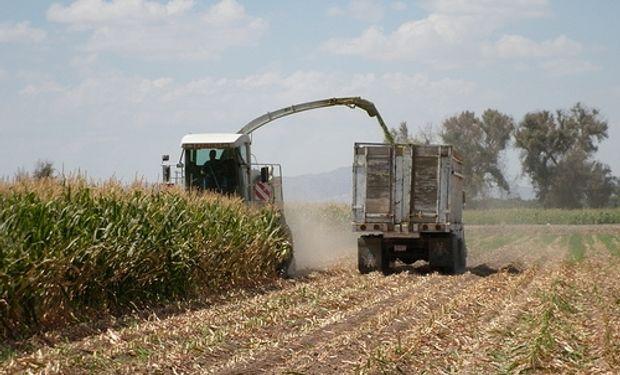 Retienen granos por los bajos precios