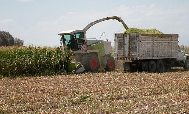 Lanworth eleva estimación de producción de maíz en EEUU