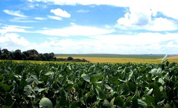 Estos kilajes de la cosecha de la oleaginosa se ubican dentro de los Rendimientos Máximos Obtenibles (RMO) que marcan las estadísticas de la provincia.