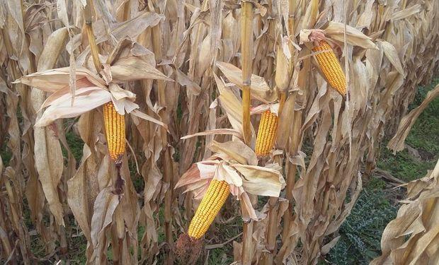 Oportunidad: pese a la caída de precios, con los granos se compran más insumos que hace un año