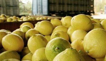 India recibió el primer embarque de limones argentinos