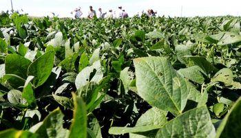 Soja: recorrida en la zona núcleo a la espera de la cosecha