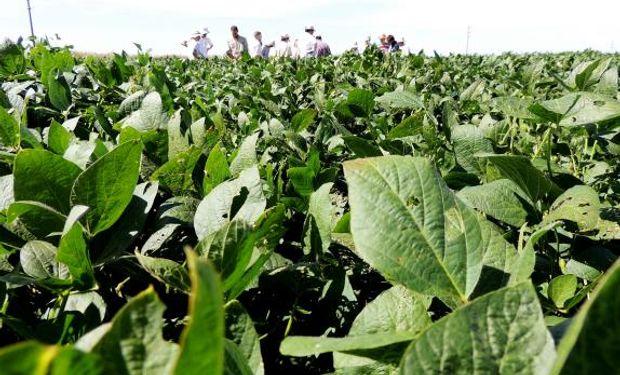 Especialistas destacaron que los cultivos implantados desde octubre a principios de noviembre son los que se encuentran con mejor potencial.