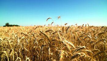 La cadena triguera se vuelve a reunir en Mar del Plata