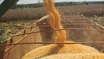 Disposición 19: precisiones sobre la liquidación de la compraventa de granos