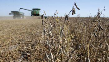 Estados Unidos: la cosecha de soja entra en la etapa final y la de maíz recién superó la mitad